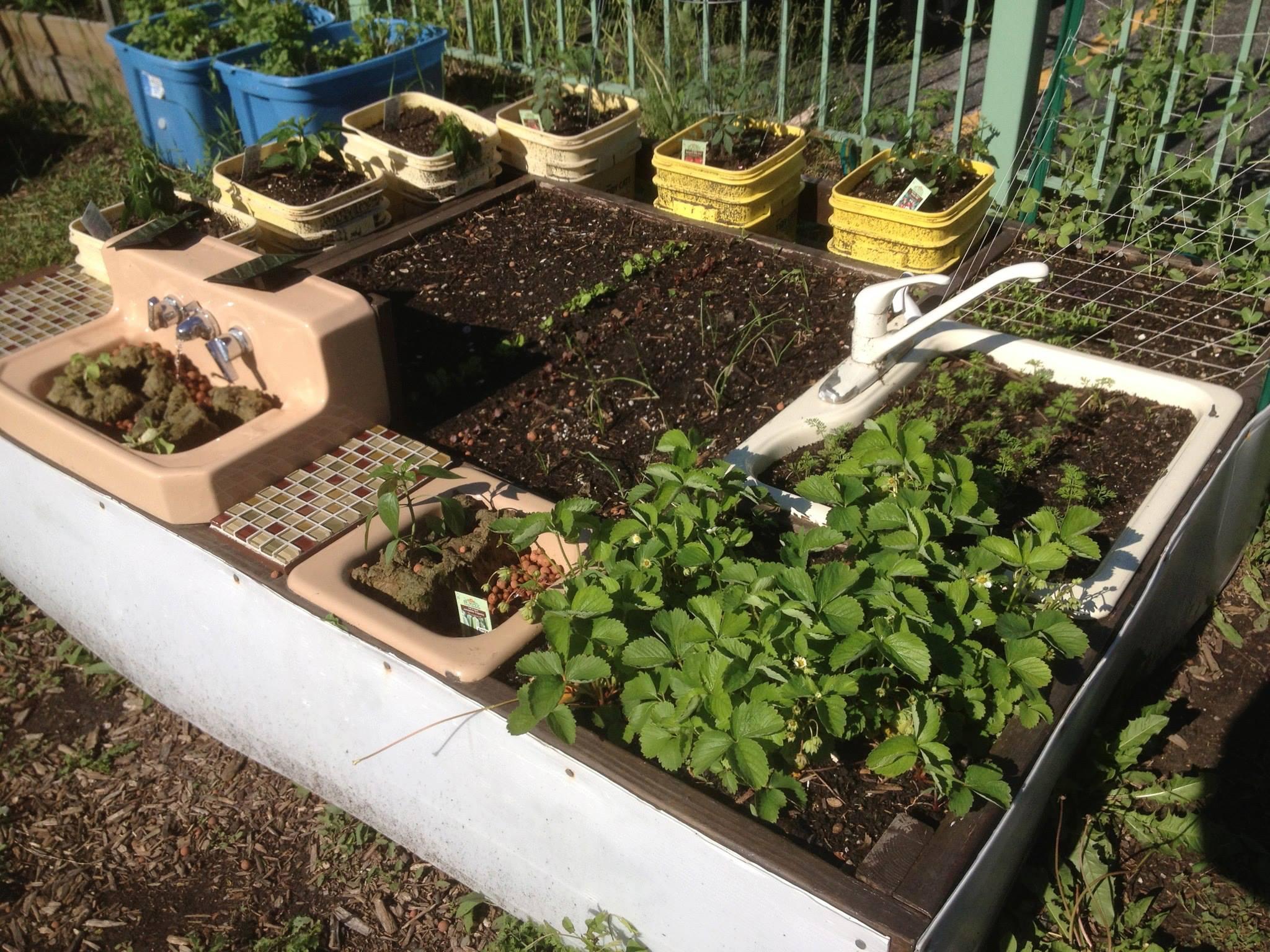About   El Paseo Community Garden